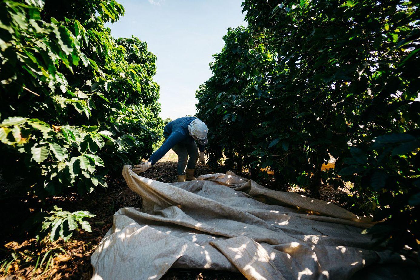 Kaffeefarm in Brasilien Uebersicht Erne